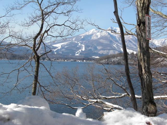ハープ画像2008年12月~2 003.jpg